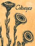 Coltseyes